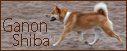Go to finnish Ganon shiba website